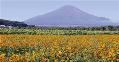 实拍日本富士山远景景观背景视频