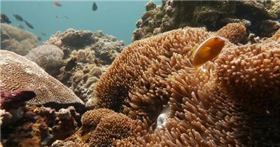 海底世界4K海洋水底海底089