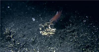 美丽的海底动物高清拍摄视频