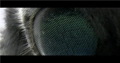 蜘蛛动物织布机 Loom企业事业单位公司宣传片外国外宣传片