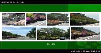 0526光明木墩道路景观设计 多媒体演示_batch 建筑多媒体景观多媒体