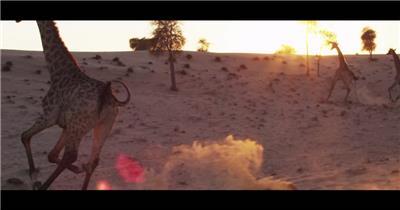 实拍动物奔跑鸵鸟长颈鹿视频