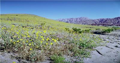 春天植物生长荒地渐变绿地变化过程