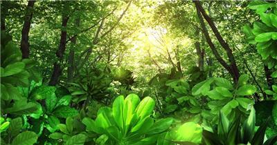 梦幻童话森林 款A00112梦幻童话森林无音乐