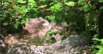 清澈水流绿草茂盛生长镜头变焦特写自然景色高清视频拍摄