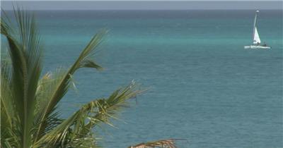 沙滩椰树 款A19152棕榈叶海洋帆船实拍视频无音乐_batch led视频背景下载