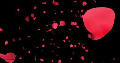 玫瑰花瓣飘落婚礼片头视频