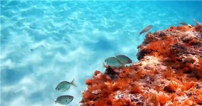 美丽的海底世界动物鱼群