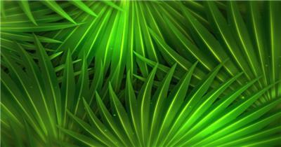 棕榈树叶循环素材-绿色环保  PalmPrivacySD 视频素材下载