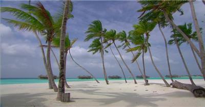 沙滩椰树 款A19141海滩椰树有音乐_batch led视频背景下载