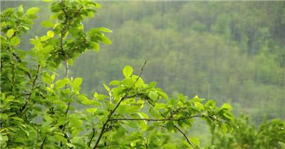 春天的雨 Spring Rain 高清视频全集_batchStoc Video高清视频素材下载 led视频背景 led下载