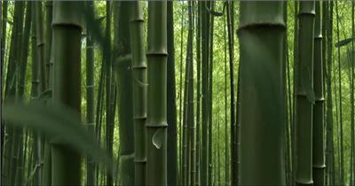 套向日葵竹子3d高清竹林avi