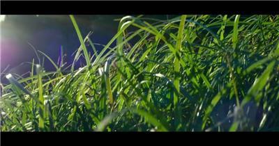 大自然绿色森林植物视频