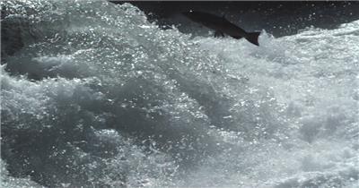 湍流与飞鱼的素材湍流与飞鱼湍流与飞鱼湍流与飞鱼 视频素材下载