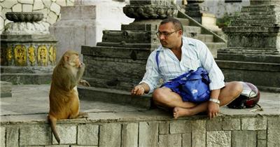 旅游景区可爱猴子群玩耍嬉戏生活镜头特写动物系列高清视频实拍