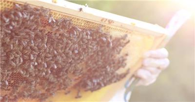 阳光照耀成群结队蜜蜂爬行移动蜂巢贮存蜂蜜动物高清视频实拍