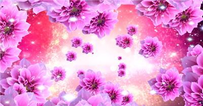 -玫瑰D3292粉红色花海