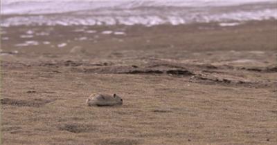 HDC070-a06西藏风情2 中国风景 实拍视频风光群山旅游_batch中国高清实拍素材宣传片