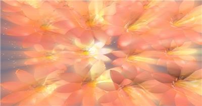 带通道的梦幻花朵转场素材_wiperose 转场视频素材