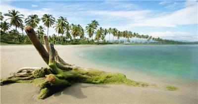 沙滩椰树 款A19144海滩无音乐_batch led视频背景下载