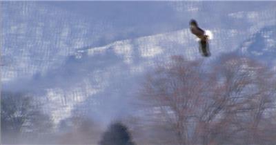 0600-鹰13动物视频动物动作