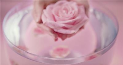 玫瑰花花园萃取工艺花朵落入水中