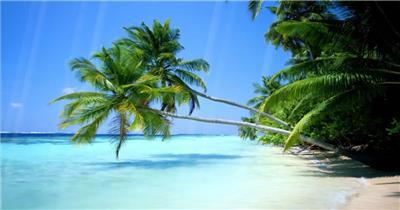 沙滩椰树 款A19118唯美沙滩风景无音乐_batch led视频背景下载