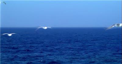 蓝天大海海鸥飞翔秀丽景色
