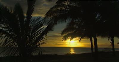 沙滩椰树 款A19137夕阳海岸椰树无音乐_batch led视频背景下载
