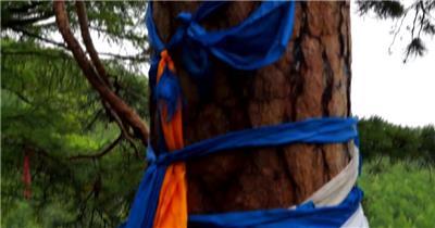 大兴安岭国家森林公园绿树成荫唯美自然景色植物特写高清视频实拍