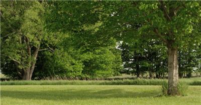 绿色优美环境公园树林阳光充足树木茂盛生长高清视频拍摄