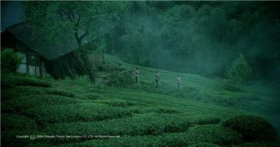 【茶在中国_品在成都】 城市宣传片视频 城市形象片
