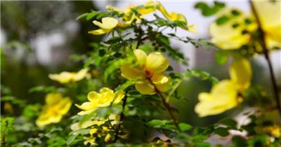 春日花和公园一角实拍