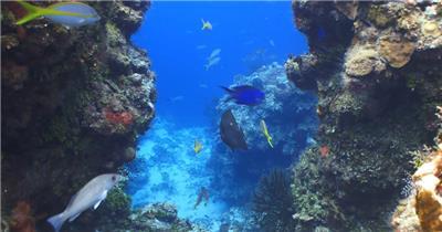 深蓝海洋海景鱼群游动珊瑚礁唯美奇幻海底世界高清视频拍摄