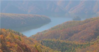 树林树木秋天风景 AM053-21植物 视频下载