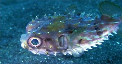 美丽的海洋世界动物摄影