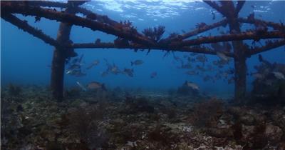 美的海洋世界动物高清摄影