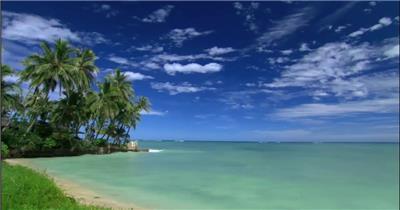 沙滩椰树 款A19147海滩椰树无音乐_batch led视频背景下载