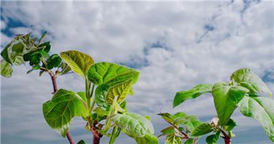 0669-树芽快速生长2 15-植物快速生长-1