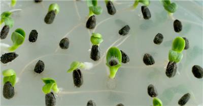 0665-嫩芽快速生长3 15-植物快速生长-1