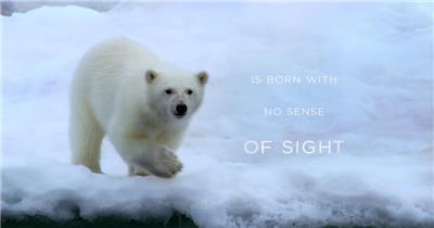Coca-Cola环保广告 北极熊篇.1080p 欧美高清广告视频