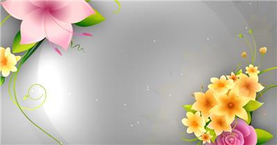 凉爽的春天 Cool Spring动态花瓣背景视频春节 新年 新春佳节 过年