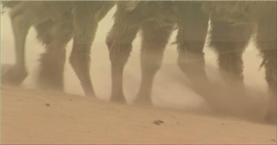0311-沙漠骆驼队3(一组)-沙漠中国实拍视频素材 视频下载中国实拍
