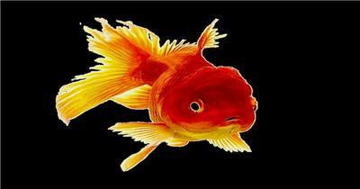 海底世界小鱼游动遮罩素材моя рыбкаr大海 海边 海洋