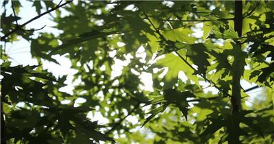 套唯美小清新树叶树林阳光空镜头 大自然春天夏天绿叶动态视频素材阳光树叶