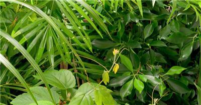 0704-植物快速生长2(腾类) 15-植物快速生长-1