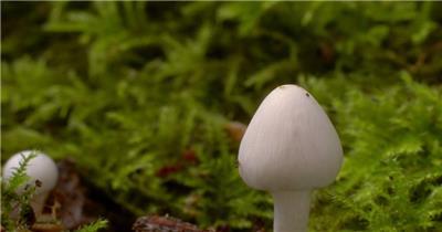 0662-蘑菇(菌类)快速生长3 15-植物快速生长-1