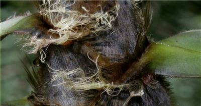 0712-竹笋快速生长2 15-植物快速生长-1