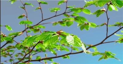 0668-树芽快速生长1 15-植物快速生长-1