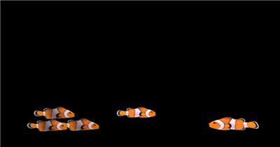 海底世界小鱼游动遮罩素材Клоуны-поворот大海 海边 海洋